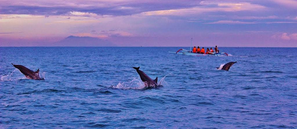 Bali Activities - dolphin